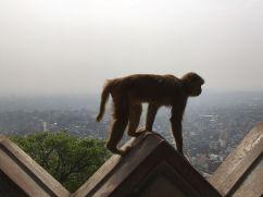 Apentempel Kathmandu