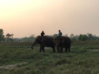 Olifanten chitwan