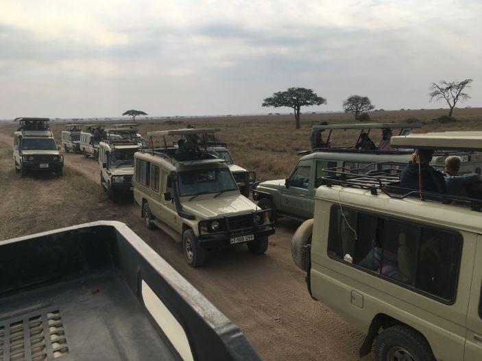 Serengeti - kijken naar leeuwen
